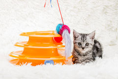 Cats. Animal play funny lovely cute pets friend kitten beautiful naughty royalty free stock image