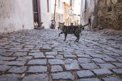 The cats on Ayvalik streets. The cats walk on streets in Ayvalik, Turkey stock photo