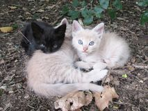 Cats baby Beautiful and tender kittens drink napping in nature. Feline brothers resting in the woods on an autumnal afternoon royalty free stock photos