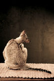 Cats Back Stock Images