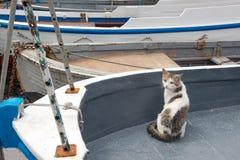 Cats of Balaklava. Cats on a fishing boat at Balaklava quay, Crimea Royalty Free Stock Photo