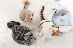 Cats with balls of yarn on the carpet Royalty Free Stock Photo
