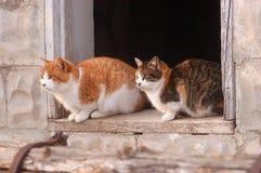 Cats in barn window stock image
