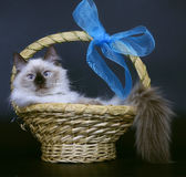 Cats in a basket. Royalty Free Stock Photo