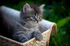 Cats in a basket on a grass Royalty Free Stock Photos