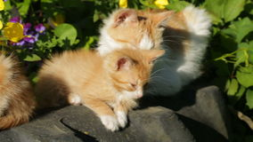 Cats basking in the sun stock video footage
