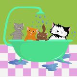 Cats in bath Stock Image