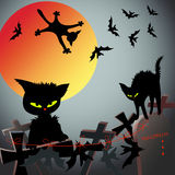 Cats and bats Stock Photo
