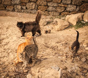 Cats on the beach, Mikonos, Greece Royalty Free Stock Photography