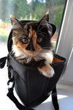 Cats. Beautiful cat sitting comfortably in the bag from the camera stock image