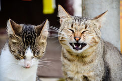 Cats. Beautiful cats family laughing outdoor near a vegetable garden Royalty Free Stock Image