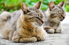 Cats. Beautiful cats near a vegetable garden Stock Image