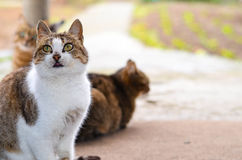 Cats Royalty Free Stock Photos
