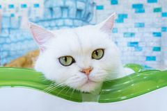 Cats in a beautiful room and cute fluffy cats. Cats in a beautiful room and cute fluffy a cats royalty free stock images