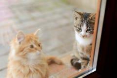 Cats Behind Door. Two cats sitting behind glass door outdoors Royalty Free Stock Photos