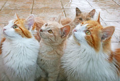 Cats behind window Stock Image