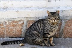 The cat is staring at me royalty free stock images