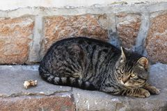 A hungry cat. Cats, belonging to felines, are divided into domestic cats and wild cats and are the most widely used pets in the world. The ancestors of the Stock Image