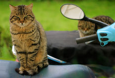 Cats on bikes Royalty Free Stock Photography