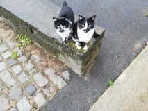 Twin brother cats stock photo