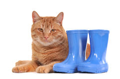 Cats and Blue Boots. Cats lying next to Blue Rubber Boots Stock Image