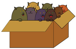 Cats in box Stock Photo