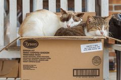 Cats in a box stock images