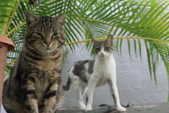 Cats boy and girl. Tabby tom Stock Image