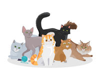 Cats Breeds Flat Vector Web Banner Royalty Free Stock Image