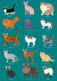 Cats breeds set Stock Photo