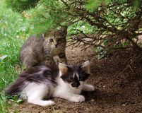 Cats. Brother with sister in the garden Stock Images