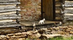 Cats and Cabins Royalty Free Stock Photography