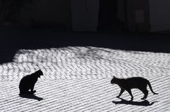 Cats in Castellet village, France. Backlight of cats in Castellet village, France, with paved street Royalty Free Stock Photo