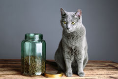Cats and Cat Food in Glass Royalty Free Stock Image