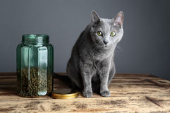 Cats and Cat Food in Glass Royalty Free Stock Photos