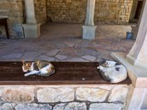 Cats in cat monastery Limassol, Cyprus. The Cats in cat monastery Limassol, Cyprus royalty free stock image