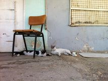 Cats Chilling in the Shadow Stock Photography