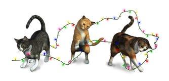 cats christmas lights playing Στοκ Εικόνες