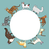 Cats circle frame with copy space Royalty Free Stock Photography