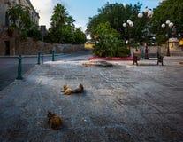 Cats of the city of Valletta. Malta. The square of the old town of Valletta. Maltese cats stock photo