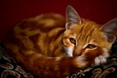 Cats are friendly and clean animals for people. Cats are clean animals living in homes stock photography