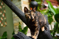 Cats climbing on branches. In home Stock Images