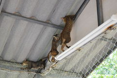 Cats climbing on the roof Stock Image