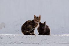 Cats. A close photo of two cats in Klima village Milos, Greece stock image