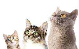 3 cats close-up portrait Royalty Free Stock Images