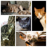 Cats collage Stock Photos