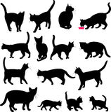 Cats collection Royalty Free Stock Photo