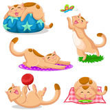 Cats collection. Set of cats in different positions Stock Image