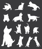 Cats collection Royalty Free Stock Image