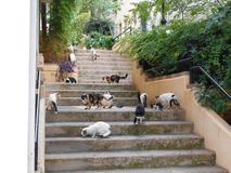 Cats on Stairs royalty free stock photos